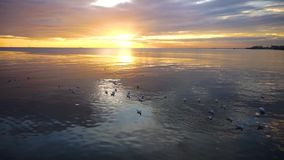 Tranquil scene cloudy sea sunset with seagulls flying at sunset. At Bang Poo Recreational Retreat, Samut Prakan, Thailand stock video footage