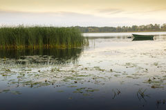 Tranquil scene, Elk Lake, masuria district. A lot of water flora on Elk Lake, Masuria District, Poland. Sunrise Stock Photos