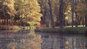 Tranquil scene on river in fall, ducks stock footage
