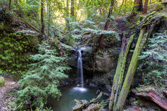 Sempervirens Falls in Big Basin Redwoods State Park, California Royalty Free Stock Images