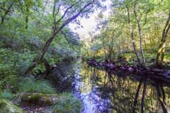 Tranquil scene of a small mountain river called Royalty Free Stock Images