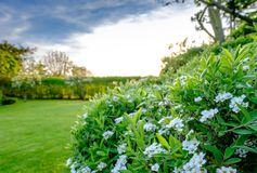 Tranquil scene of a well maintained English garden seen before dusk, in early summer. The large garden had recently had its lawn cut, the hedges are seen also royalty free stock photo