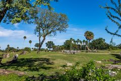 Safari enclosure full of animals royalty free stock photo