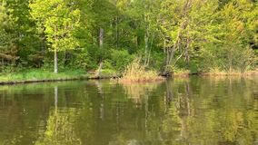 Tranquil scenery of the forest reflected onto the surface of the Chippewa Flowage in Hayward, WI.  stock footage