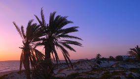 Tranquil sea and coastline with palm trees at sunset on beach. Tranquil sea and coastline with palm trees at purple sunset on sandy beach. Beautiful sunrise at stock video
