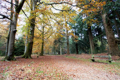 Tranquil seated area in the autumn forset Stock Photography