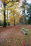 Tranquil seated area in the autumn forset Royalty Free Stock Photography