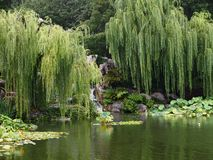 Tranquil Secluded Oriental Garden with Weeping Willow & Pond. Stock Photo