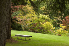 A Tranquil Spot. A bench in a tranquil, wooded spot amongst trees in autumn colors in Van Dusen Gardens, Vancouver, British Columbia, Canada stock photography