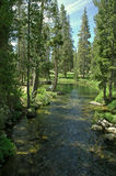 Tranquil Stream. Flowing from an alpine lake royalty free stock images