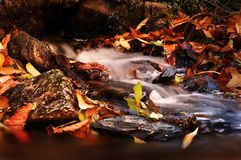 Tranquil Stream. An image of flowing water surrounded by Autumn Foilage Stock Photos