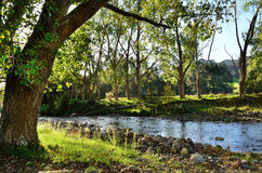 Tranquil stream. A tranquil rural setting with a river running by royalty free stock image