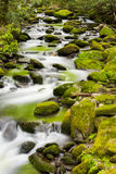 Tranquil Stream in the Smokies Stock Image
