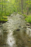 Tranquil Summer Stream Royalty Free Stock Images