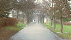 Tranquil Tree Alley During First Snow. People walking at the end of tree alley during first snow fall stock footage