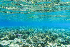 Tranquil underwater Royalty Free Stock Photos