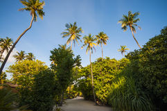 Tranquil walk way through tropical palm trees and plants Royalty Free Stock Photography