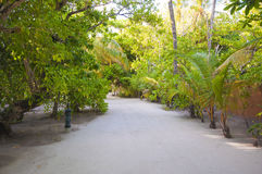Tranquil walk way through tropical trees and plants Stock Images