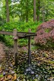 Tranquil water feature in a lush Beautiful green woodland garden with dense foliage.  stock photography