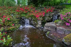 Tranquil water feature in a lush Beautiful green woodland garden with dense foliage and rhododendron flowers royalty free stock images