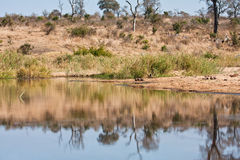 Tranquil waterhole in the wilderness Stock Image