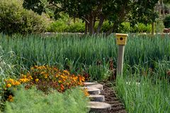 Tranquil, well stocked garden and a yellow bird house at the end of the path at Babelstoren Wine Estate, South Africa. Tranquil, well stocked garden, with a stock image