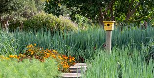 Tranquil, well stocked garden with a variety of plants, with yellow bird house. Tranquil, well stocked garden, with yellow bird house in the distance royalty free stock images