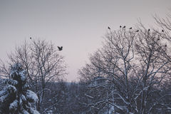 Tranquil winter lanscape with birds flying Royalty Free Stock Photos