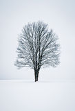 Tranquil Winter Scene Stock Images