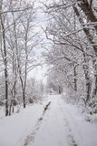Tranquil Winter Wonderland Royalty Free Stock Images
