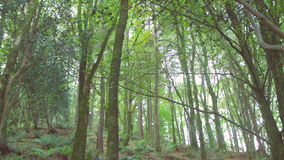 Tranquil wooded area. In the countryside stock video