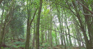 Tranquil wooded area stock footage