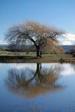 Tranquilidad del río de Macquarie Imagenes de archivo