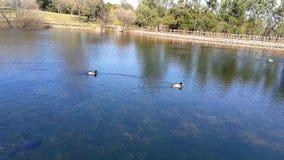Tranquilidad en un lago de aguas azules almacen de video