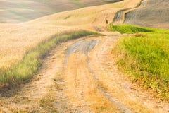Tranquilidad toscana que camina en el camino entre el fie Fotos de archivo libres de regalías