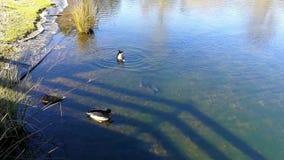 Tranquilidade em um lago de águas azuis video estoque