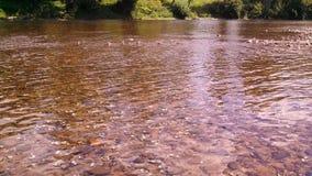 Tranquilidade nova do rio Fotografia de Stock