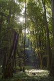 Tranquilité au milieu de la forêt photo stock