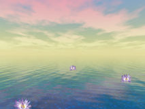 Tranquility. Lotus float upon still water Stock Image