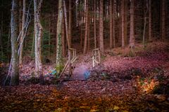 Mystery forest in the evening stock image