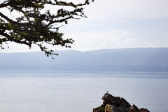 Tranquility at Lake Baikal Royalty Free Stock Photo