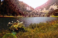 Tranquility on the lake Stock Image