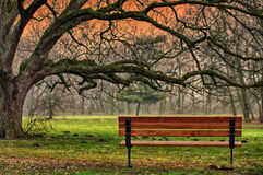 The tranquility of the park. Romantic and peaceful place Stock Photography