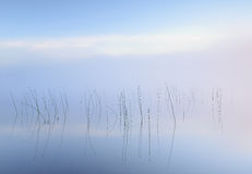 Tranquility. Reeds reflecting in the water a beautiful quiet morning Stock Photography