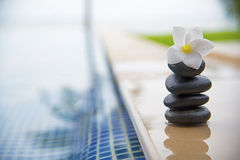 Tranquility scene of peaceful life Royalty Free Stock Images