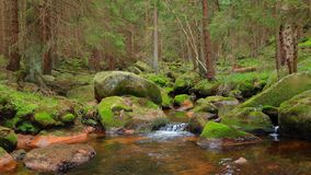 Romantic forest scenery in the Harz mountains, Germany. A tranquil stream and mossy stones in the lush green forest. stock images