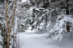 Tranquillità di inverno Fotografie Stock