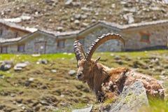 Tranquillità nella montagna Fotografie Stock Libere da Diritti