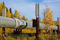 The Trans-Alaska Pipeline in Fall Royalty Free Stock Images