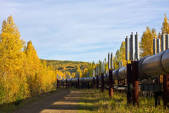 Trans-Alaska Pipeline in Fall Royalty Free Stock Images